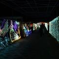 Photos: イルミミュージアム