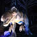 写真: 恐竜のライトアップ