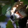 Photos: 葉陰から何を見る?