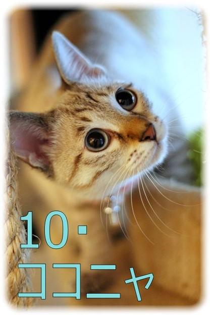 エントリーNo10