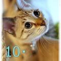 Photos: エントリーNo10