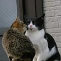 Valentine day Kiss!