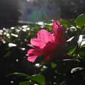 Photos: 日向ぼっこ2017.12.06目白庭園