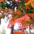 写真: 秋色(11)