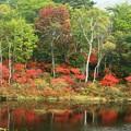 一沼は紅色に染まりはじめ。