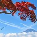 写真: 紅もみじと飛行機雲。