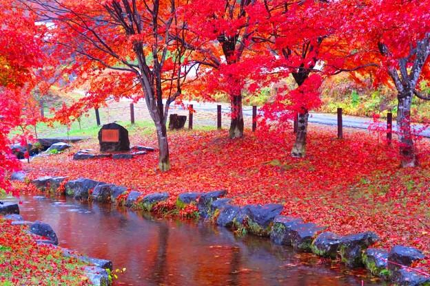 くれない色に染まる公園。