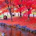 写真: くれない色に染まる公園。