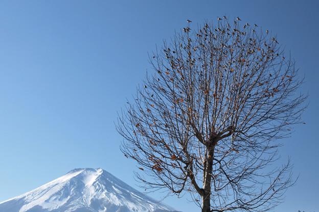 鳥の華咲く冬の日。