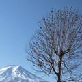 写真: 鳥の華咲く冬の日。