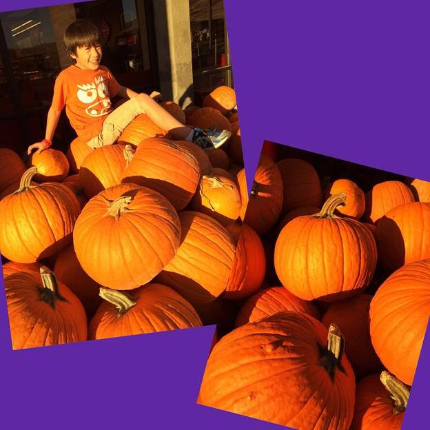 Picking Pumpkins!