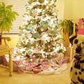 Santa came~!!!