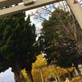 お散歩… 八坂神社