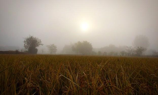 Foggy Morning...