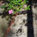 きになる花