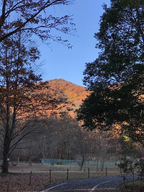 みかも山の紅葉(東斜面)