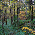 写真: Autumn Forest