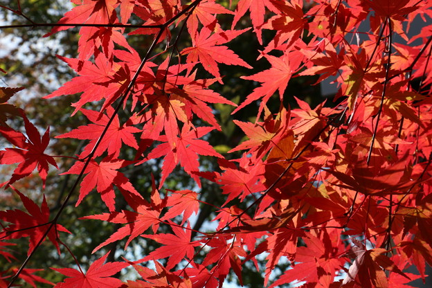 成沢城址公園にて 紅葉