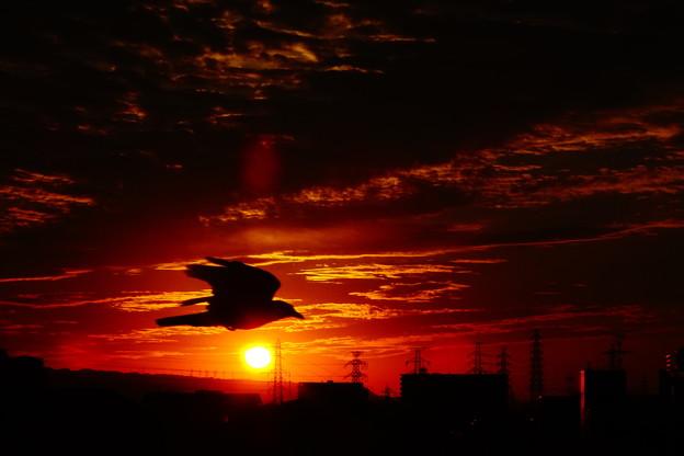写真: 朝の光