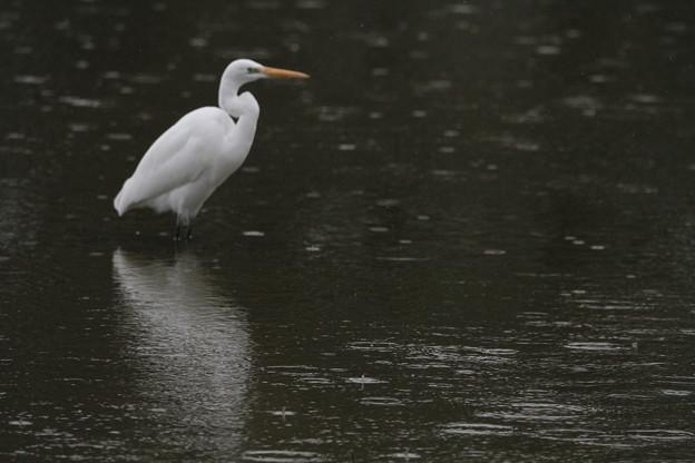 Photos: 雨のボート公園