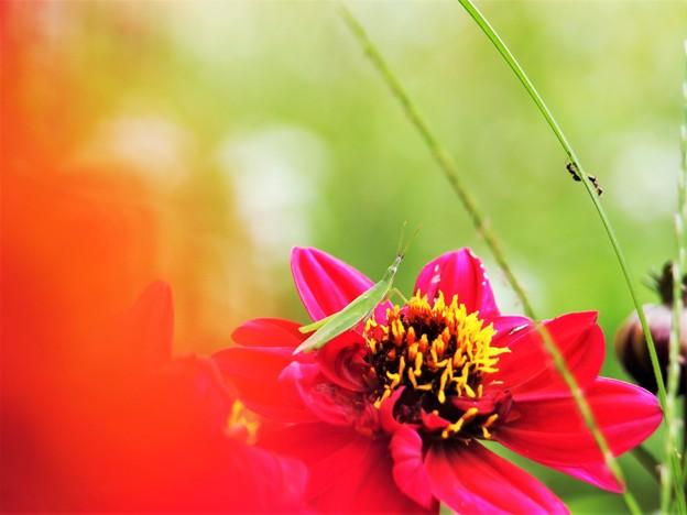 赤い花の上に