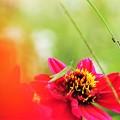 写真: 赤い花の上に