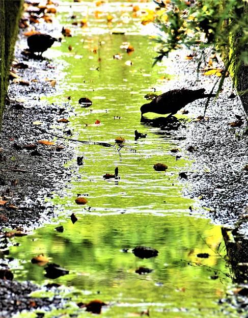 写真: 水たまり