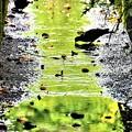 Photos: 水たまり