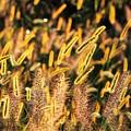 写真: 発光する秋色