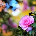 写真: ピンクちゃん♪