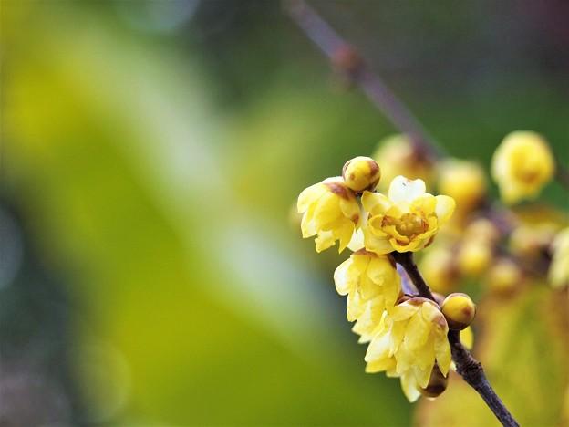 写真: 冬の香り