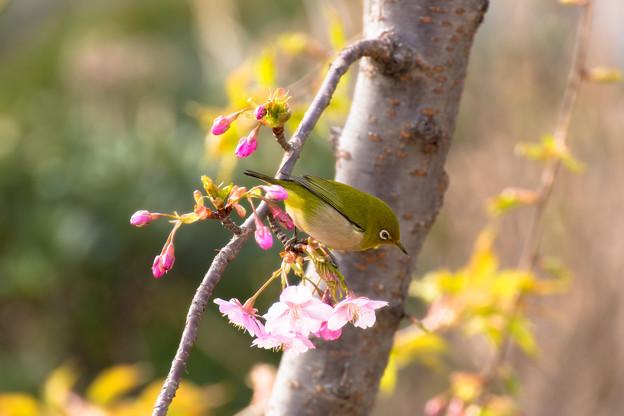 Photos: 春の気配