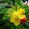 花と実と 2