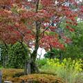 写真: 公園秋模様