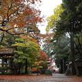 Photos: 鶏足寺22s