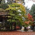 Photos: 鶏足寺23s