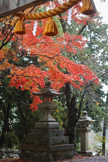 Photos: 鶏足寺24s