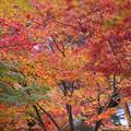 写真: 永源寺10s