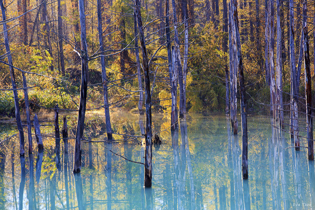 写真: 青池