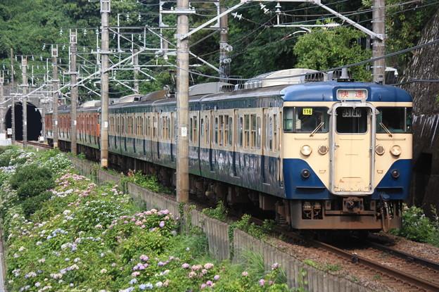 Photos: 113系2000番台マリ116編成 団臨「急行伊豆号」