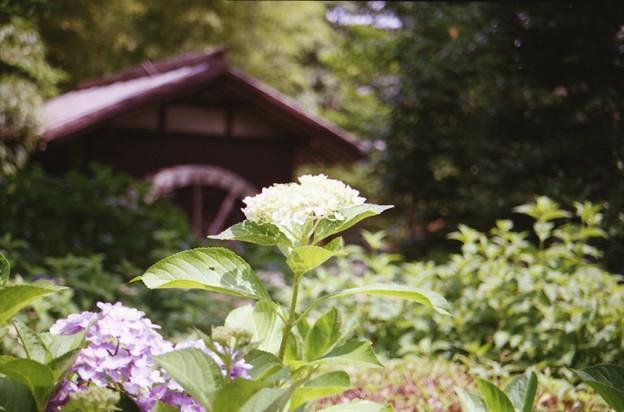 20170624_府中市郷土の森博物館