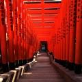 写真: 山王稲荷神社の鳥居