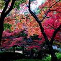 写真: 秋らしく