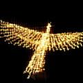 写真: 光鳥