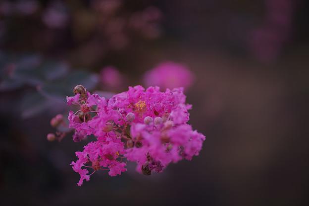 長月の花5