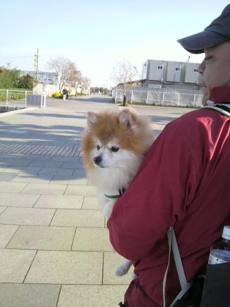 写真: 散歩の途中で疲れたらしいf...