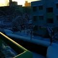 写真: 夜明けのスキャット♪