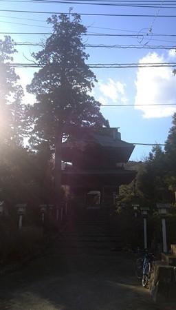 勝楽寺の山門がとっても立派でしたそして大きな杉も。心に打つものがある。