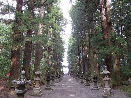 灯籠の並ぶ参道@冨士浅間神社
