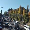 写真: 駒沢公園の紅葉